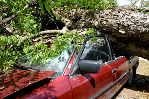 Car squashed by tree